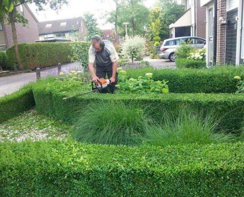 Hovenier-Hemrik- Hegknippen-tuinonderhoud