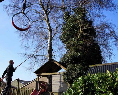 Bomen snoeien-boomverzorg - Hovenier Hemrik -ing